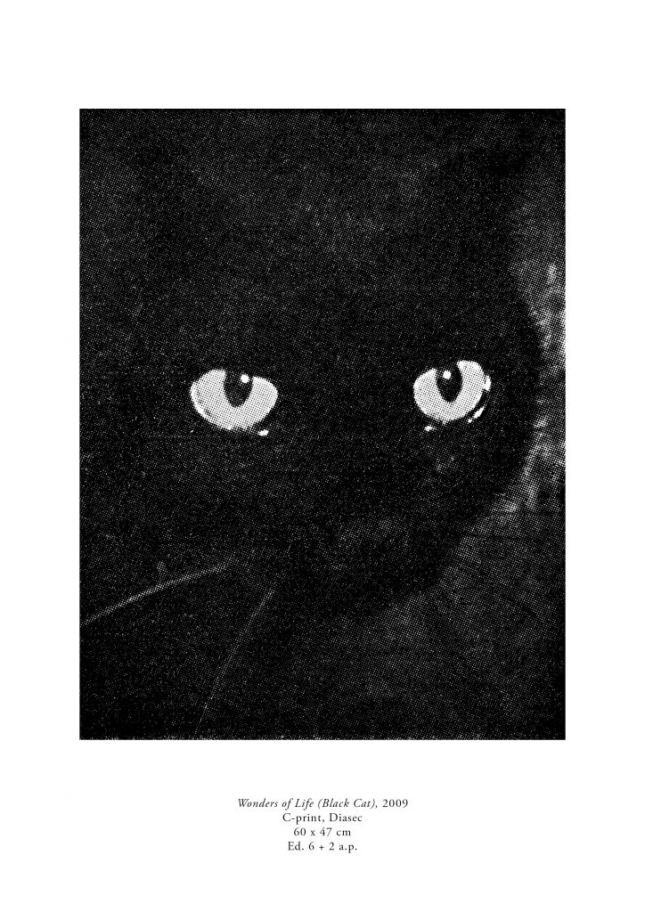 Milja Laurila: black cat