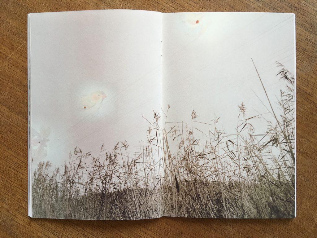 Milja Laurila's artist book 355 memories.